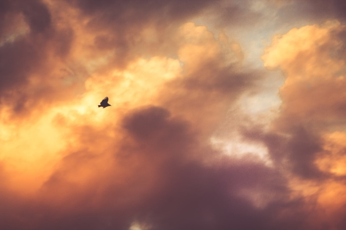 bird-flying-clouds-cloudy-large