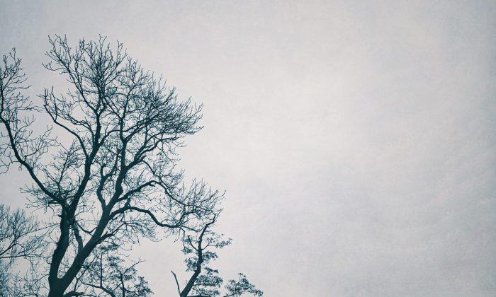 cropped-img_2213-1.jpg
