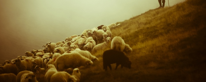 sheep_shepherd_pasture_field_fog_26611_2560x1024